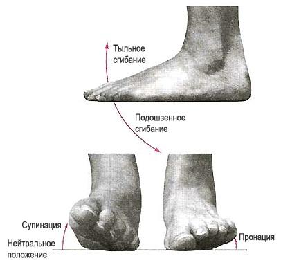 фото тыльное сгибание стопы